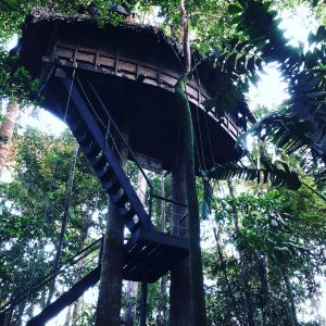 Tanimboca Tree House